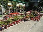 240px-Butchart-gardens-007[1].jpg