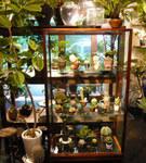 store_shibuya_2[1].jpg